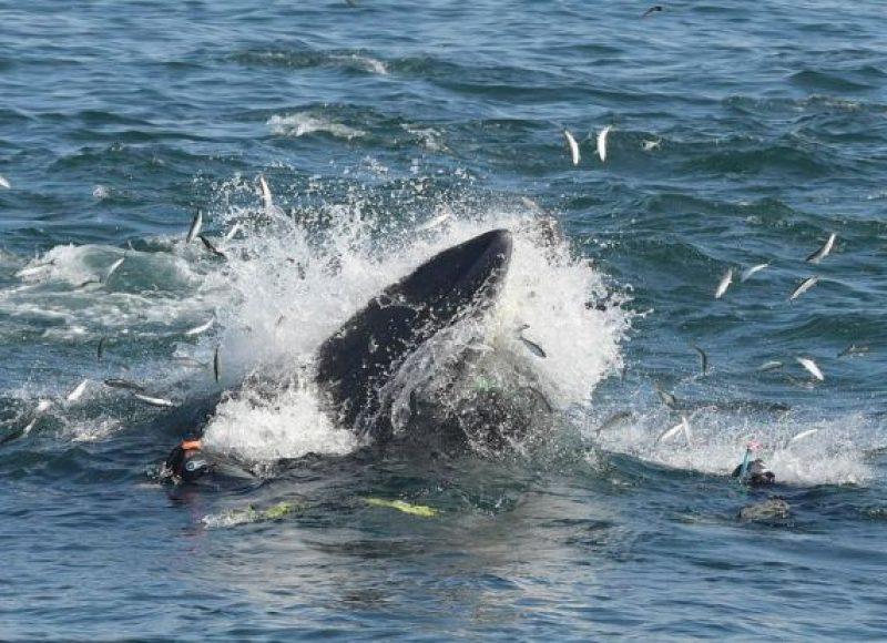 Τον κατάπιε φάλαινα και επέζησε!